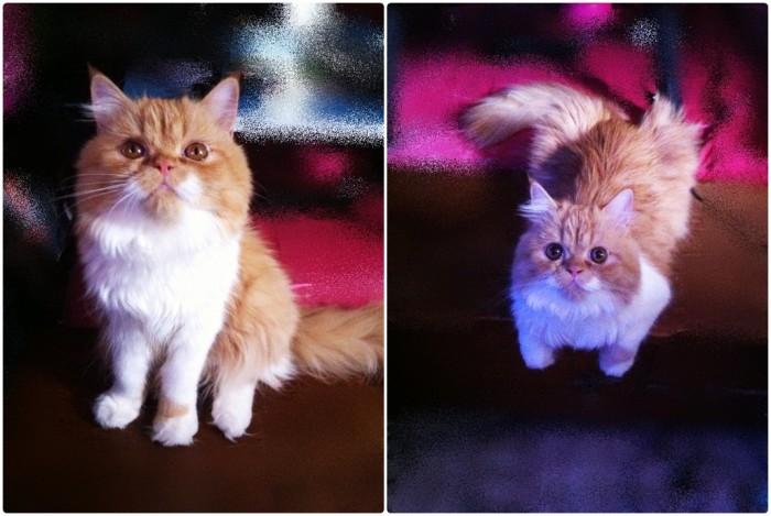 การดูแลแมวหลังคลอด